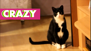 Cat has these model like legs - Video