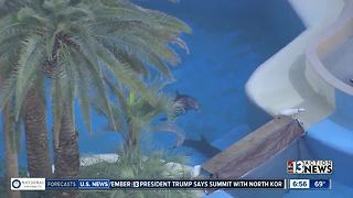 Dolphins swimming at The Mirage - Video