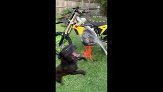 This cute pup won't let its owner wash his bike