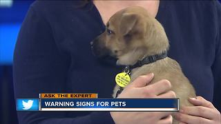 Pet owners should watch for signs of health problems - Video