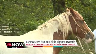 Horse sinking in mud saved by metro Detroit first responders - Video