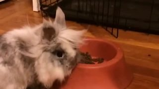 Dog bewildered as bunny eats from his food bowl - Video