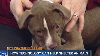 Ask the Expert: Tech can help shelter animals - Video