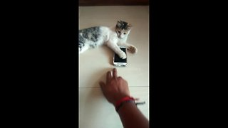 Naughty kitten won't let his owner use the phone