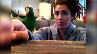 Surprise Parrot Snack Attack