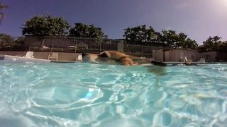 Adorable corgi goes for relaxing swim in swimming pool - Video