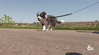Protect your pet's paws from hot asphalt