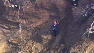 Dog rescued from side of San Francisco cliff - Video