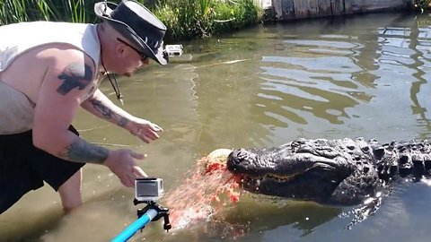 Gator handler shows of awesome power of creature's jaws as it crushes watermelon