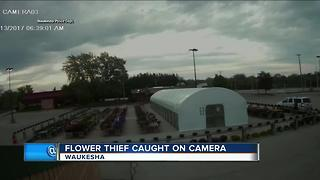 Waukesha flower theft caught on camera