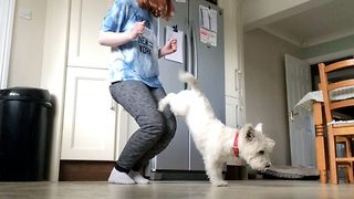 Clever canine has all the tricks up his collar! - Video