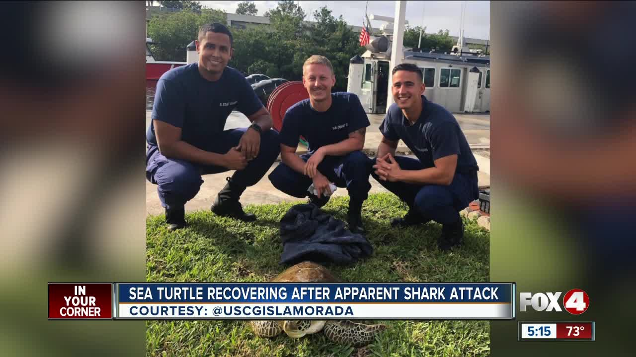 Sea turtle recovering after shark attack