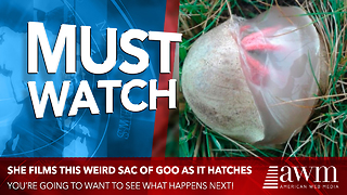 She Finds A Gooey Egg Sac In Her Backyard. Films It As It Hatches, Goes Viral Overnight - Video