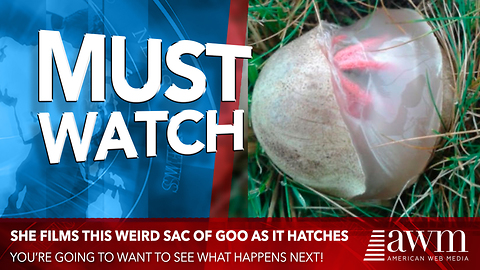 She Finds A Gooey Egg Sac In Her Backyard. Films It As It Hatches, Goes Viral Overnight