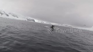 Scientists report humpback whale baby boom in Antarctica - Video