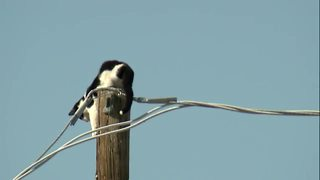 Cat stuck on an electric pole in Phoenix - Video