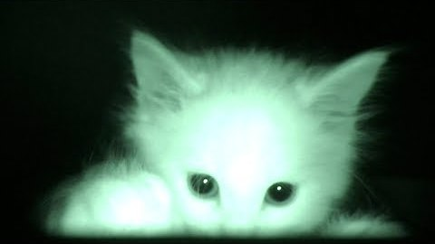 Man Is Confused Why His Cats Sleep All Day, He Sets Up Camera At Night And Watches This Footage