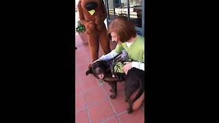 Service dog gets to meet Shaggy & Scooby Doo