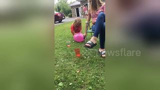 Adorable little girl pops balloon only to fall flat on her face