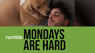 "Mondays are ""ruff"" in this hilarious doggy-filled compilation!"