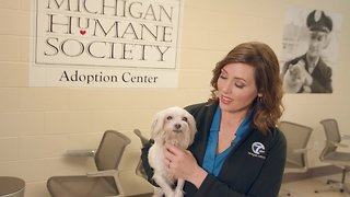 Join us for the Michigan Humane Society 2019 telethon
