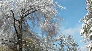 Tree Catches Fire After Touching Electrical Wire in Milton, Georgia - Video