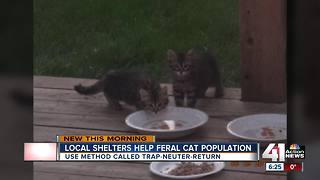 Local shelters work to help feral cat population - Video