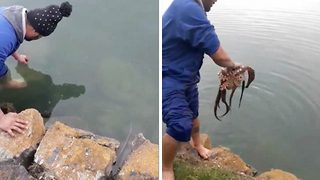 Incredible footage shows man catching two octopus with just his bare hands