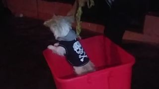 Tiny Dog Braves Texas Floods in Makeshift Boat - Video