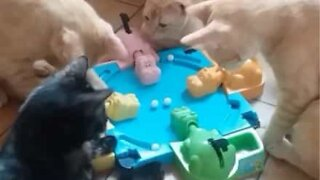 Curious cats try to play Hungry Hungry Hippos
