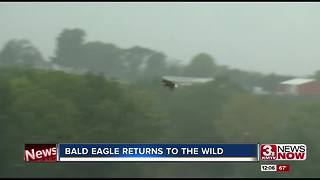 Injured bald eagle released in the wild from Fontenelle Forest - Video