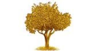 Gold Grows in Trees - Video