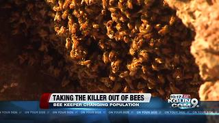 Valley beekeeper taking the 'killer' out of killer Africanized bees - Video