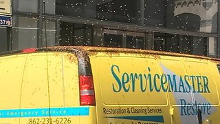 Bees Swarm Service Van on Manhattan Street - Video