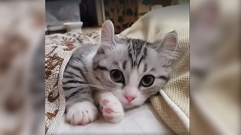 WOW !! Cutest kitten ever seen