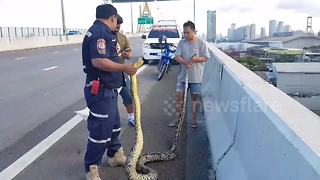 5-foot-long python causes traffic chaos on motorway - Video