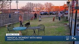 Mindful Moment with Mike: Easing Your Pet's Stress