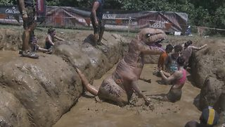 T-Rex sinks his teeth into Tough Mudder course