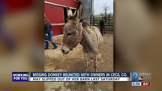 Missing Donkey Reunited with owners in Cecil Co.