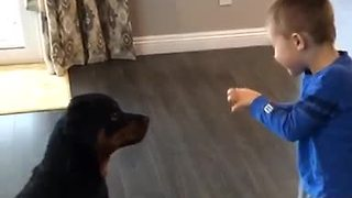 Rottweiler training with 4-year-old boy - Video