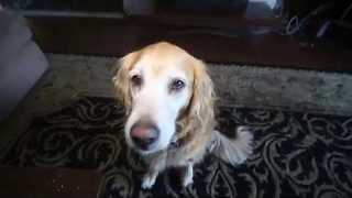 "Funny Dog ""Impersonates"" Paris Hilton and Lindsay Lohan"