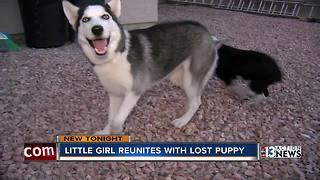 Stolen dog returned to Las Vegas family - Video