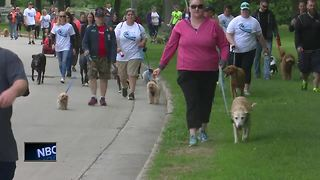 Hundreds come together for 19th annual PetWalk - Video