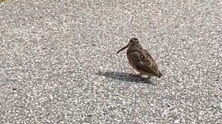 Bird has the coolest dance moves