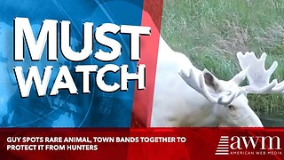 Guy Spots Rare Animal, Town Bands Together To Protect It From Hunters