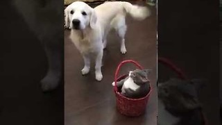 Playful Pup Fights With Cat Over Basket - Video
