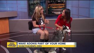 Rescues in Action: Adonis