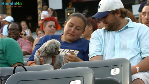 Derby and Rookie - Trenton Thunder Bat Dogs