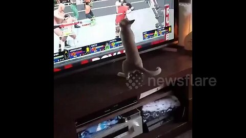 'Kitty fighter' attempts to join in video game wrestling match on TV