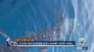 Whale shark spotted off the coast of Palm Beach